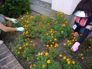 花ボラさん花壇整備